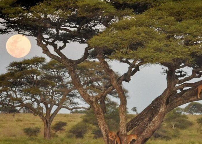 8 Days Tarangire Lake Manyara Serengeti Ngorongoro