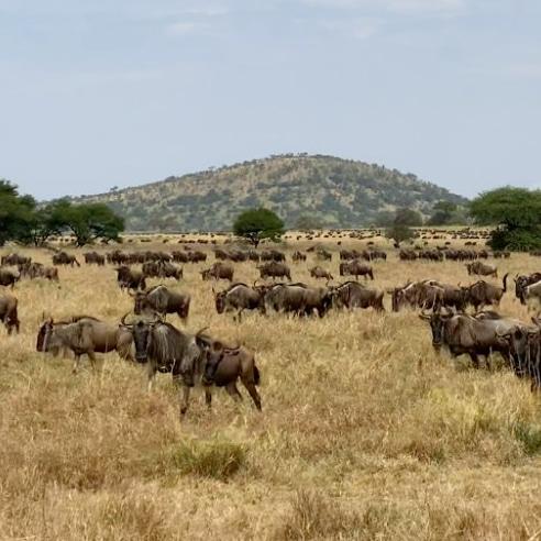 6 Days Camping Safari to Lake Manyara and Ngorongoro