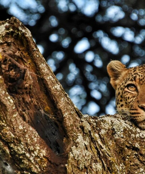 8 Days Safari to Tarangire Serengeti Ngorongoro Lake Natron