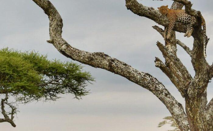 7 Days Tarangire Lake Manyara Serengeti and Ngorongoro