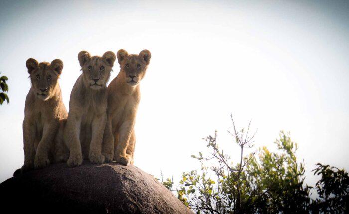 5 Days Great Lake Manyara Ngorongoro and Serengeti