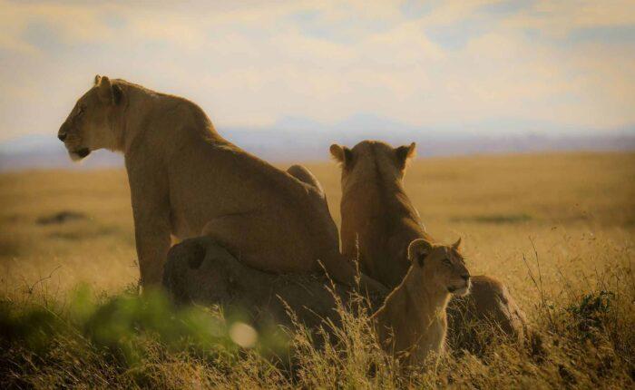 3 Days Safari to Tarangire Lake Manyara and Ngorongoro Crater