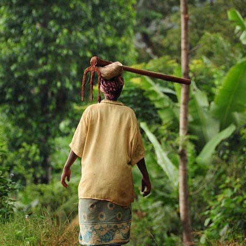 Unforgettable Day Trip Marangu Village cultural tourism