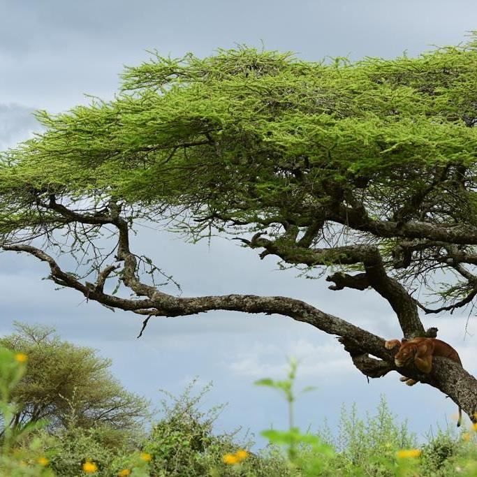 Unforgettable Day Trip to Lake Manyara National Park