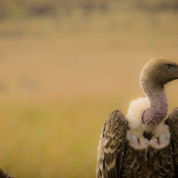 3 Days Tarangire Lake Manyara and Ngorongoro Itinerary