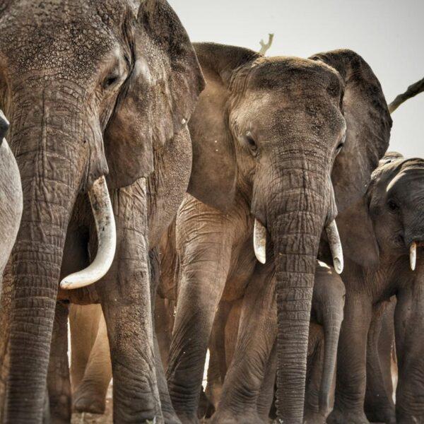 9 Days Safari to Arusha Tarangire Serengeti Ngorongoro and Lake Eyasi