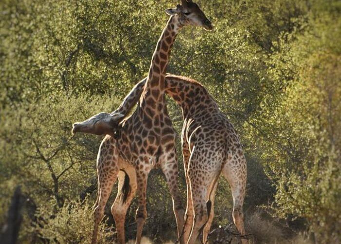 Combo Tour 12 Days - Climbing and Safari Itinerary