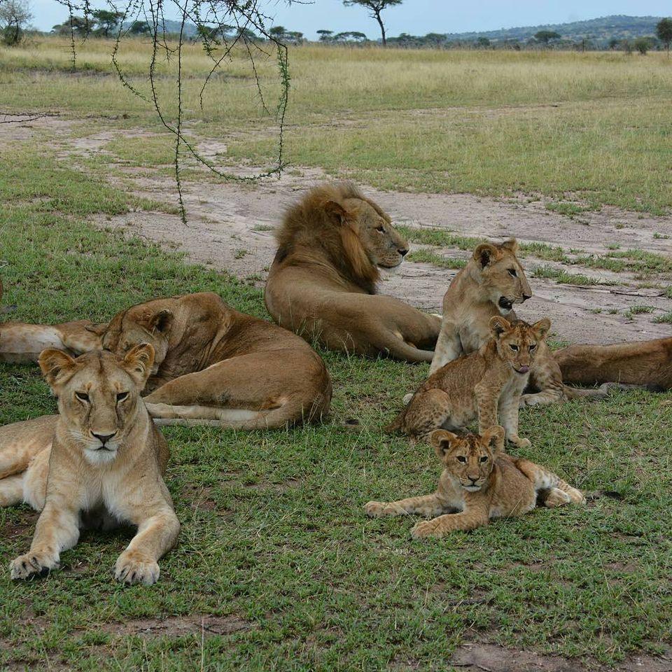 3 Days Camping safari to Tarangire Lake Manyara and Ngorongoro