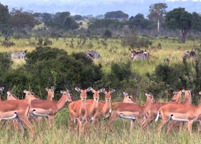 3 Days Great Adventure Safari to Mikumi National Park