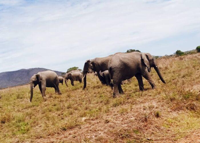 5 Days Camping Safari to Tarangire Serengeti and Ngorongoro