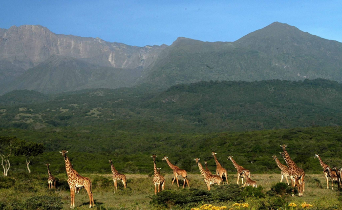 Unforgettable Day Trip Safari to Arusha National Park